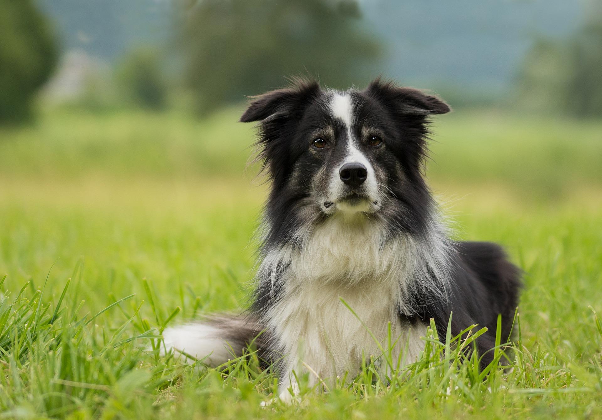 Assistenzhunde: Wie Hunde Menschen mit Beeinträchtigungen das Leben erleichtern