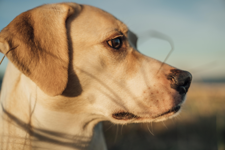 Feines Näschen – Können Hunde Krebs riechen?