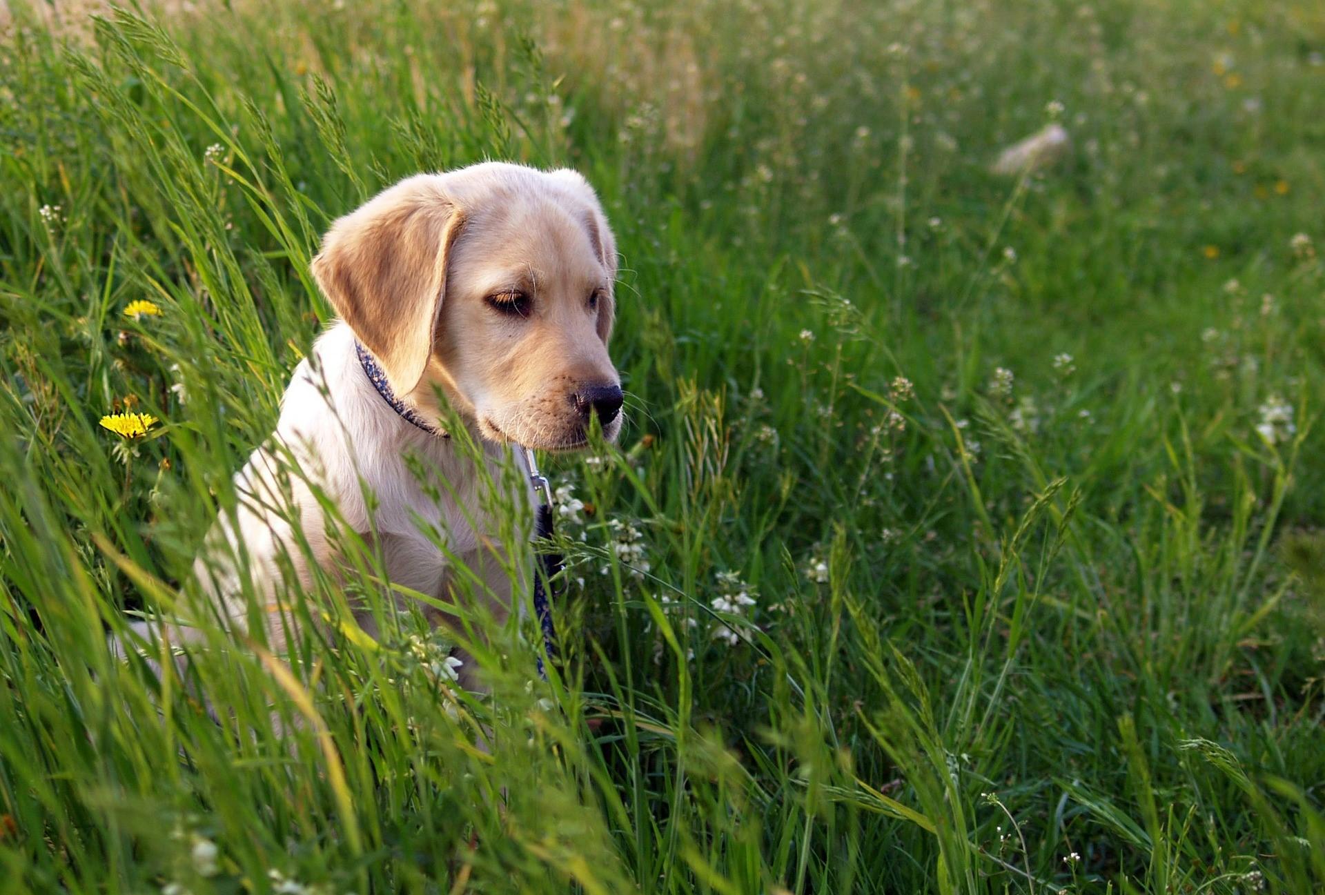 Zeckenbiss bei Hunden: Hilfe, mein Hund hat eine Zecke!